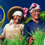 International Rice Congress 2014 @ Bitec Bangna – 27th to 31st October