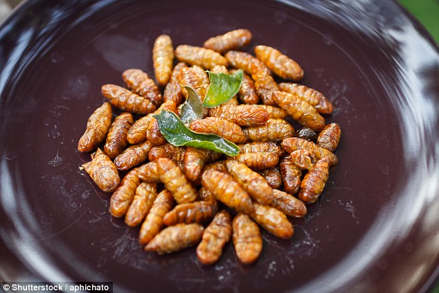 superfoods_insects